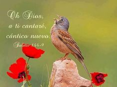 Salmo 144:9