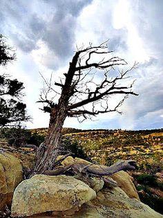 New Mexico :)