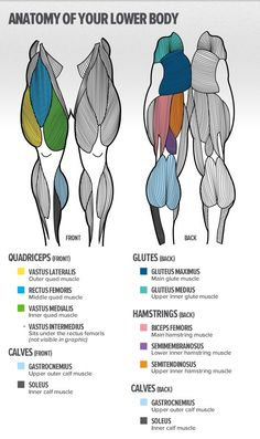 #gym #gymtime #piernas #músculos Leg Muscles Anatomy, Leg Anatomy, Muscle Anatomy, Anatomy Study, Anatomy Reference, Human Anatomy, Anatomy Drawing, Leg Reference, Muscles In The Back