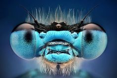 25 Inpiring Examples of Macro Photography