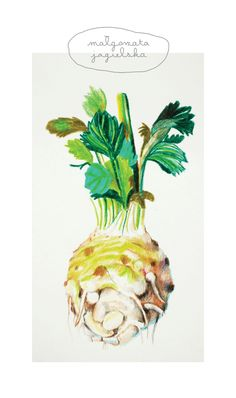 #celery #illustration