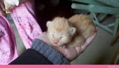Just a 4 Day Old Kitten in the Palm of My Hand…