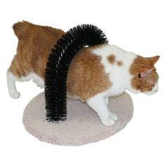 Fantasy Pet Self-Grooming Cat Brush. I think the boys would love this!!