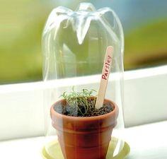 Widowsill greenhouse.  Use a 2 liter, 16oz bottle, a canning jar, bell jar...