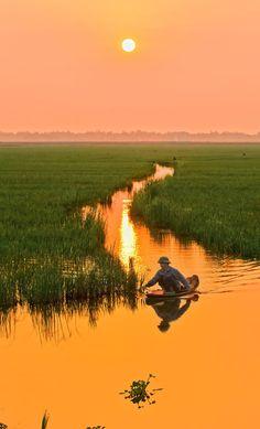Vietnam. Sonnenuntergang und Reisfeld.