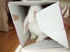 Jeg - Duncan i mitt ess! Esker!!! <3 Me - Dunciboy - in my perfect element - boxes!!!  2014/IJ