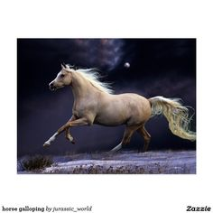 white horse, night, running horse x 1080 px] - Animals/Horses - Pictures and wallpapers Horse Photos, Horse Pictures, Pretty Horses, Beautiful Horses, Cavalo Wallpaper, Painted Horses, Horse Mane, Horse Horse, Horse Galloping