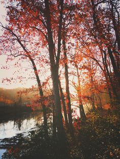 themountainlaurel:  Craig's Creek autumnal beauty