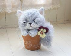 I'm so catty ! so catsome ! so cutesome...  猫3 #cats 猫