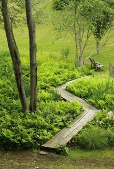 Wooden Walkway in the midst of green that goes down to a wooden chair to relax in.