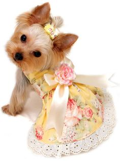 http://tinkerbellscloset.com/images/0%25200%25200%25203%2520yellow%2520rose%2520dog%2520dress.jpg