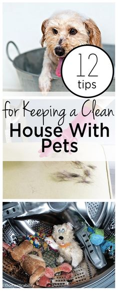 12 Tips for Keeping a Clean House With Pets- Wrapped in Rust