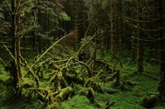 Are you lucky enough to live aside from hipsters and megathrust earthquakes? Then, you have some beautiful forests around you to set foot in. However, we want to show you the most magnificent forests, full of the massive trees, moss and ferns. Prepare for magic!