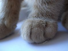 Paw of the Day!
