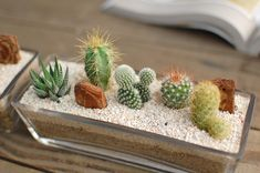 saboten-s | Rakuten Global Market: [I put a cactus, five kinds of fleshy plants and plant it / ガラスレクト L]