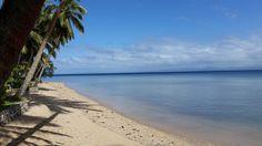 Die ältestens #Kaffee Bauern sind #Ameisen! ☕🐜🌱 👉Wie sie das auf #Fidschi anstellen, lest ihr hier http://bunaa.de/de/fidschi/