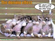 I LOVE sleeping puppies!