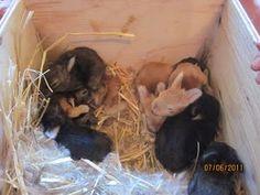 awwwwe! bunny love!