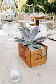 Pot Your Own Succulent Centerpieces