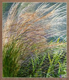 Handmade Embroidery Art ~ Yan's Design DC: How magnificent - I can feel the ocean just beyond the grasses.