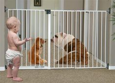Imperial Long Pet Gate - Solid Wall Mount Design - used as Pet or Baby Gate *** See this great product. (This is an affiliate link and I receive a commission for the sales) Pet Gate, Pet Dogs, Pets, Dog Itching, Dog Training Pads, Dog Dental Care, Baby Gates, Dog Shower, Dog Id Tags