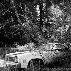 Denver Film Photographer - Mark Hayes : Photo