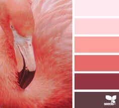 Flamingo Hues via @designseeds #designseeds #seedscolor #color #colorpalette #color #palette #colour #colourpalette