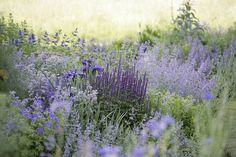backyard garden paths & beautiful road ideas within budget 77 Prairie Garden, Meadow Garden, Dry Garden, Garden Cottage, Garden Plants, Garden Kids, Garden Sofa, Purple Garden, Colorful Garden