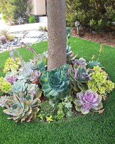 Garden Landscaping 47 Enchanting DIY Vertical Planter 47 Enchanting DIY Vertical Planter Such A Dreamy Garden Of Succulents Gardening Succulents Succulent Landscaping, Succulent Gardening, Front Yard Landscaping, Planting Succulents, Easy Landscaping Ideas, Succulent Garden Ideas, Succulent Tree, Succulent Outdoor, Diy Garden