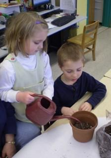 Two Scholastic plant lesson plans (learn about/grow plants)
