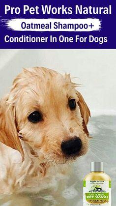 Diy Shampoo, Shampoo And Conditioner, Funny Dogs, Cute Dogs, Oatmeal Shampoo, Usa Pro, Dog Memes, Small Dogs, Pets
