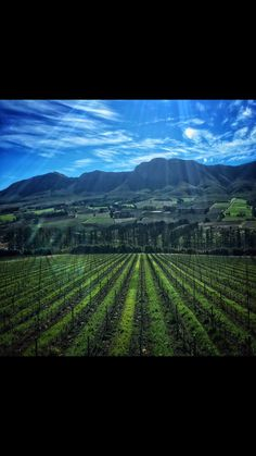Fabric print inspiration - Hemel and Aarde valley in the Western Cape Joy Clothing, Iphone Photography, The Real World, Real Women, Printing On Fabric, Cape, African, Inspiration, Outdoor