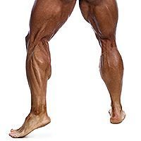 Build Muscle on Your Stubborn Calves in the Next 3 Weeks
