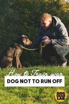 Dog Obedience Training Does your dog always bolt for the door? Here's how to train your dog not to run off when the door opens or they are not on the leash. Check out these dog training tips. Training Your Puppy, Dog Training Tips, Training Classes, Potty Training, Agility Training, Training Videos, Off Leash Dog Training, Dog Agility, Training Online