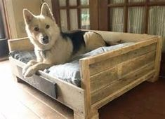 If you receive too many pallet woods back at your house, and then let's use it for creating a pallet dog bed. Pallet dog bed is the place where your dog can sit Pallet Dog Beds, Diy Pallet Bed, Diy Pallet Furniture, Diy Pallet Projects, Furniture Ideas, Outdoor Pallet, Furniture Design, Outdoor Furniture, Furniture Vintage