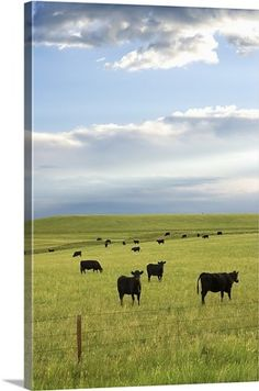 Premium Thick-Wrap Canvas Wall Art Print entitled Cattle, None