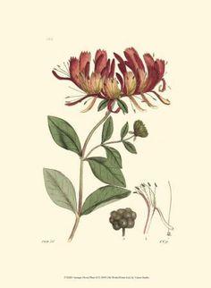 Antique Floral Plate II Art Print at Art.com