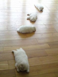 the trail of sleeping puppies..or one puppy spinning epicly across the floor