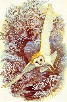 Barn Owl ~ Charles F Tunnicliffe