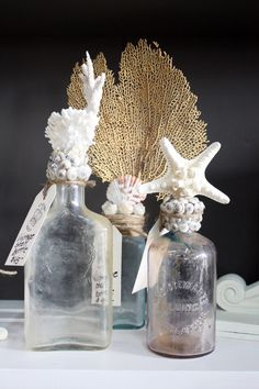 Old bottles, shells, coral, sea fan