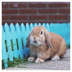 Instagram.com/Jenns_bunnies