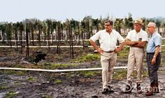 """Donn Tatum (then vice president, Walt Disney Productions), Bill Evans (director of landscape architecture), and Roy O. Disney (chairman of the board and chief executive officer) at the Tree Farm during the early construction of Walt Disney World Resort. Bill Evans and his brother landscaped the grounds of Walt's home with the railroad. Walt later called about landscaping a """"little project"""" called Disneyland. He retired in 1975."""