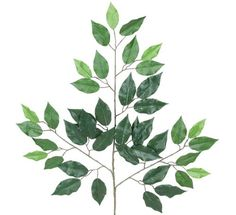 FOUR Dozen (48 pieces) of 24' Ficus Spray with a total of 2016 leaves >>> Check out this great product.