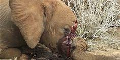 Clique aqui para descobrir sobre o papel do Yahoo na extinção dos elefantes e como você pode ajudar a impedir a matança!