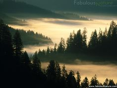 Mist covers the woods where Belle and Draco take refuge.