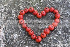 Rowan berries heart