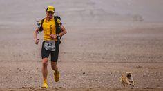 Geschichte einer echten Freundschaft: Hund folgt Extremsportler 120 Kilometer durch die Wüste
