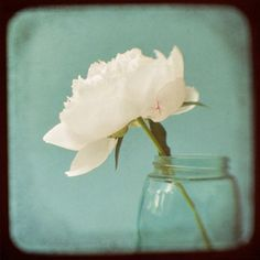 Pink Peony Flower Photo - Floral Wall Art - TTV Fine Art Photograph. $25.00, via Etsy by Kitty Rogers