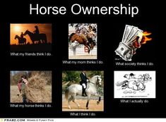 what my horse thinks I do is so true xD Horse Girl, Horse Love, Horse Pictures, Funny Pictures, Equestrian Quotes, Equestrian Problems, Funny Horses, Horse Puns, Horse Humor