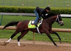 Palace Malice (b. May 2, 2010) and Mike Smith. This first-crop son of Curlin won the 2013 Belmont and Jim Dandy Stakes.